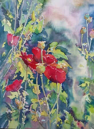 Lind's Poppies